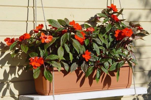 Купить балконные цветы феерия цветов курьерская доставка цветов в киеве